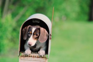 a small dog in a mailbox