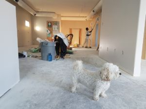 a dog in an apartment which is being painted