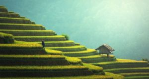 A cottage on a hillside in Asia.