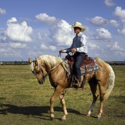 Cowboy wondering why did settlers move to Texas?