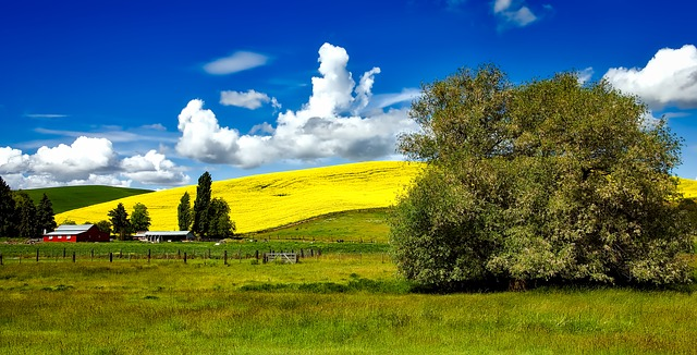 A pasture in Idaho.