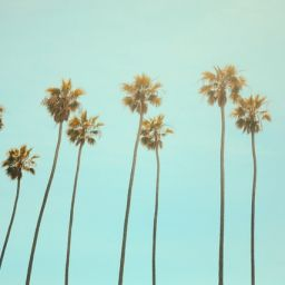 A low angle photography of palm trees