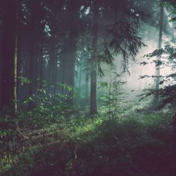 an image of a forest, read about Tips for living off the grid